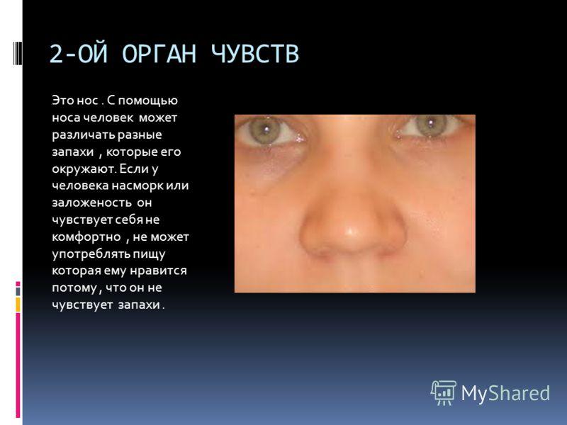 2-ОЙ ОРГАН ЧУВСТВ Это нос. С помощью носа человек может различать разные запахи, которые его окружают. Если у человека насморк или заложеность он чувствует себя не комфортно, не может употреблять пищу которая ему нравится потому, что он не чувствует
