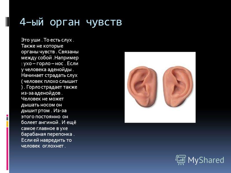 4–ый орган чувств Это уши. То есть слух. Также не которые органы чувств. Связаны между собой.Например : ухо – горло – нос. Если у человека аденойды. Начинает страдать слух ( человек плохо слышит ). Горло страдает также из-за аденойдов. Человек не мож