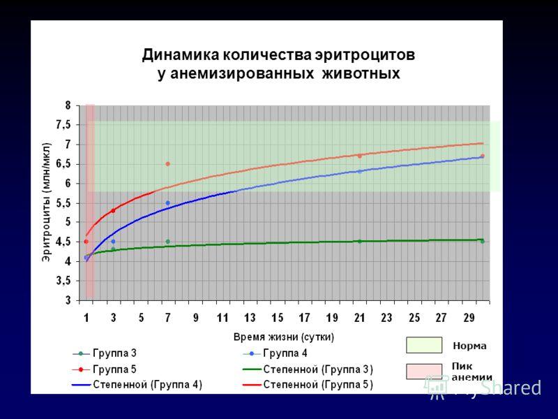 Норма Пик анемии Динамика количества эритроцитов у анемизированных животных