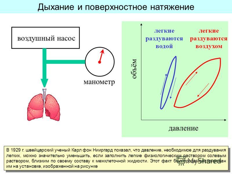 Дыхание и поверхностное натяжение В 1929 г. швейцарский ученый Карл фон Нииргард показал, что давление, необходимое для раздувания легких, можно значительно уменьшить, если заполнить легкие физиологическим раствором солевым раствором, близким по свое