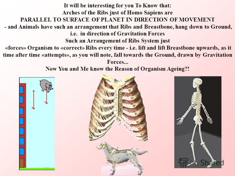 It will be interesting for you To Know that: Arches of the Ribs just of Homo Sapiens are PARALLEL TO SURFACE OF PLANET IN DIRECTION OF MOVEMENT - and Animals have such an arrangement that Ribs and Breastbone, hang down to Ground, i.е. in direction of