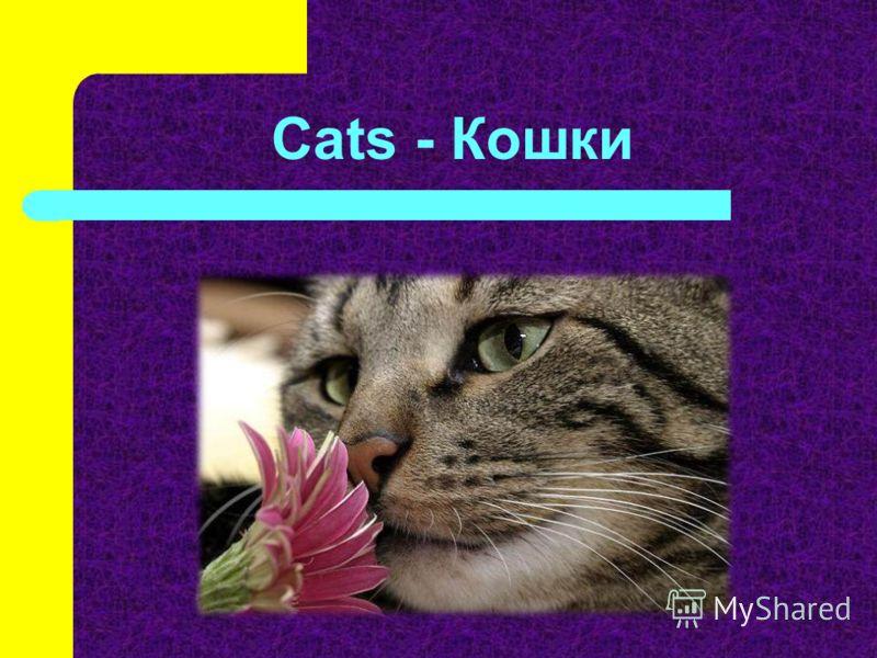 Cats - Кошки