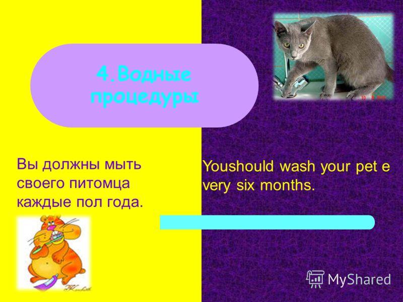 Вы должны мыть своего питомца каждые пол года. 4.Водные процедуры Youshould wash your pet e very six months.