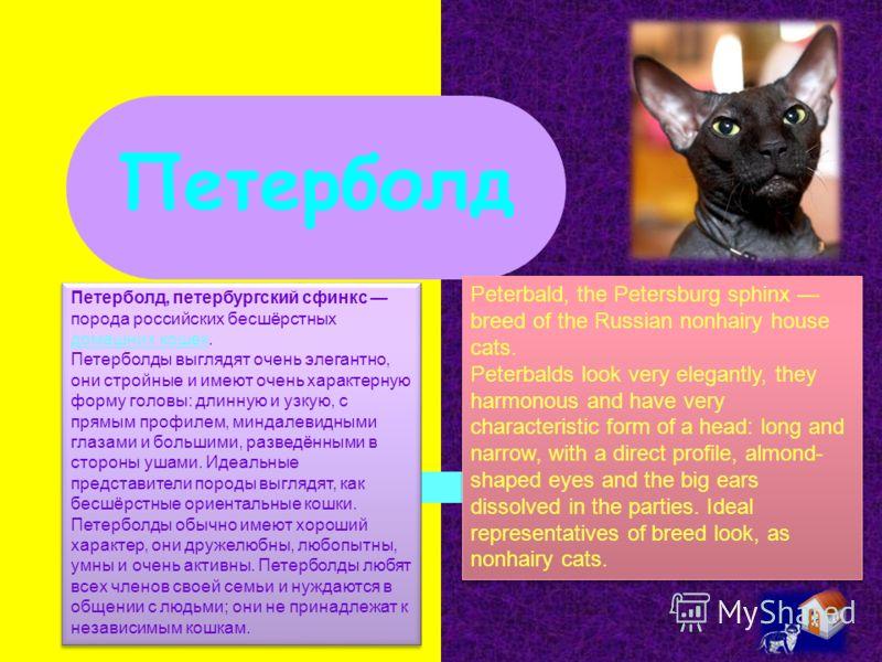 Петерболд Петерболд, петербургский сфинкс порода российских бесшёрстных домашних кошек. домашних кошек Петерболды выглядят очень элегантно, они стройные и имеют очень характерную форму головы: длинную и узкую, с прямым профилем, миндалевидными глазам