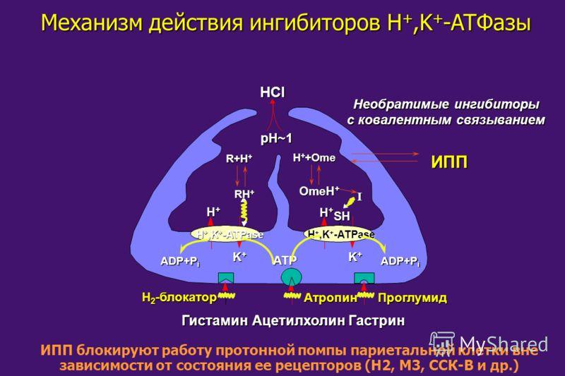 Механизм действия ингибиторов H +,K + -ATФaзы ГистаминАцетилхолин Гастрин Гастрин Атропин Проглумид Проглумид H 2 -блокатор H+H+H+H+ K+K+K+K+ K+K+K+K+ H+H+H+H+ H +,K + -ATPase ADP+P i ATP HClpH~1 SH Необратимые ингибиторы с ковалентным связыванием ИП