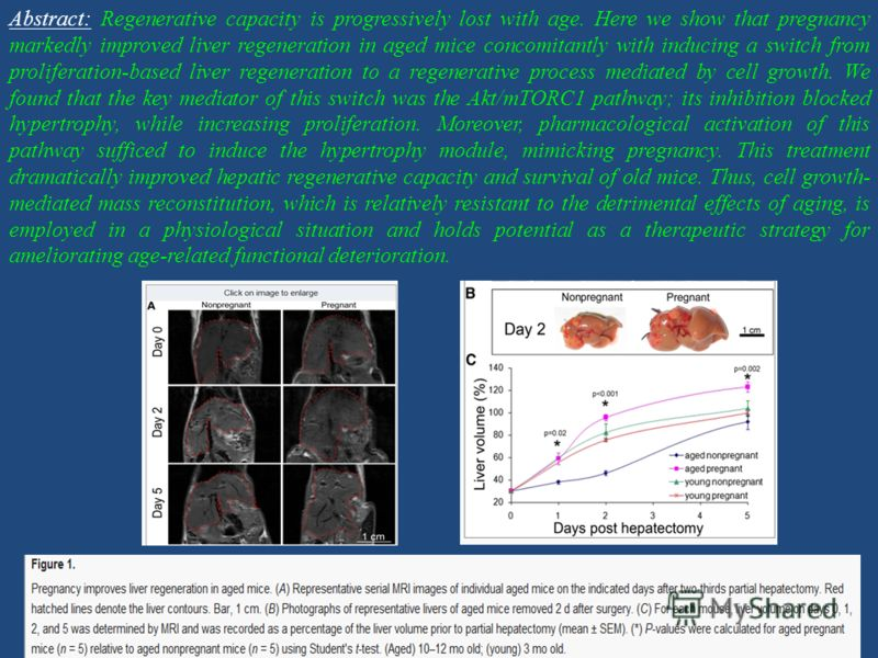 Abstract: Regenerative capacity is progressively lost with age. Here we show that pregnancy markedly improved liver regeneration in aged mice concomitantly with inducing a switch from proliferation-based liver regeneration to a regenerative process m