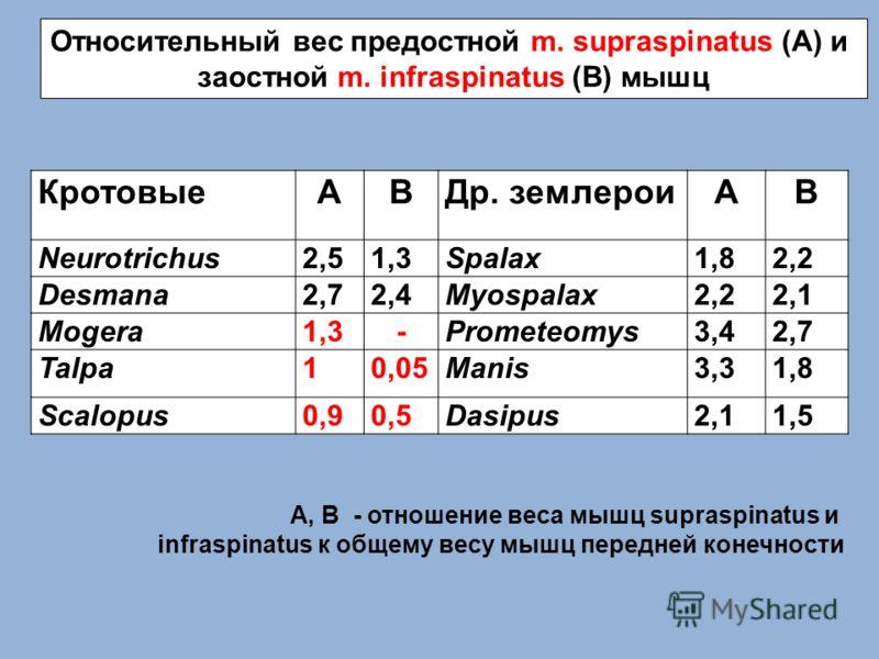 КротовыеАВДр. землероиАВ Neurotrichus2,51,3Spalax1,82,2 Desmana2,72,4Myospalax2,22,1 Mogera1,3-Prometeomys3,42,7 Talpa10,05Manis3,31,8 Scalopus0,90,5Dasipus2,11,5 Относительный вес предостной m. supraspinatus (A) и заостной m. infraspinatus (B) мышц