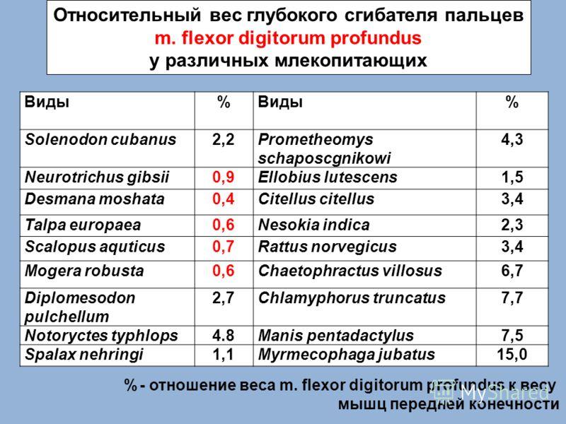Относительный вес глубокого сгибателя пальцев m. flexor digitorum profundus у различных млекопитающих Виды% % Solenodon cubanus2,2Prometheomys schaposcgnikowi 4,3 Neurotrichus gibsii0,9Ellobius lutescens1,5 Desmana moshata0,4Citellus citellus3,4 Talp
