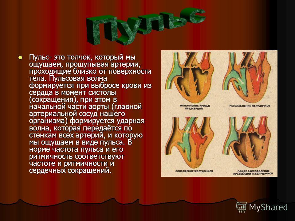 Пульс- это толчок, который мы ощущаем, прощупывая артерии, проходящие близко от поверхности тела. Пульсовая волна формируется при выбросе крови из сердца в момент систолы (сокращения), при этом в начальной части аорты (главной артериальной сосуд наше