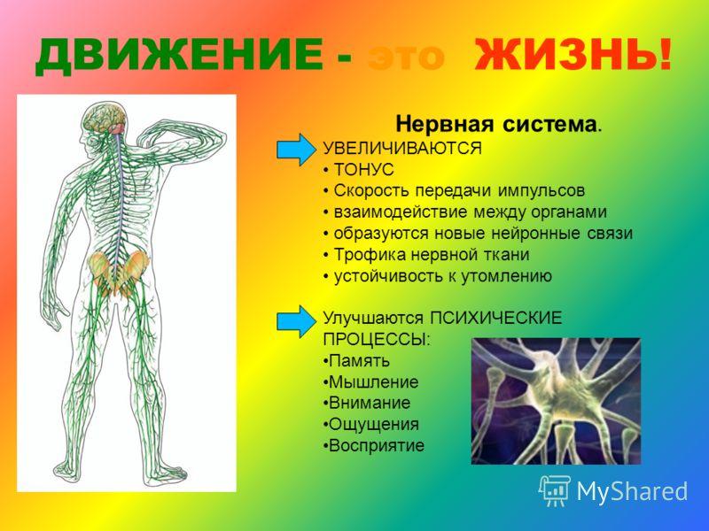 ОПОРНО-ДВИГАТЕЛЬНЫЙ АППАРАТ мышечных клетках увеличивается интенсивность обмена веществ; повышается потребление мышцей кислорода; возрастает скорость распада веществ, дающих энергию; увеличивается кровоснабжение работающих мышц; повышается температур
