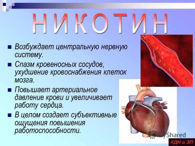 Возбуждает центральную нервную систему. Спазм кровеносных сосудов, ухудшение кровоснабжения клеток мозга. Повышает артериальное давление крови и увеличивает работу сердца. В целом создает субъективные ощущения повышения работоспособности. КДН и ЗП