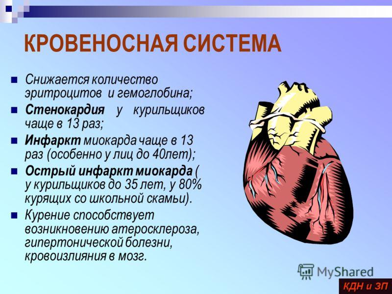КРОВЕНОСНАЯ СИСТЕМА Снижается количество эритроцитов и гемоглобина; Стенокардия у курильщиков чаще в 13 раз; Инфаркт миокарда чаще в 13 раз (особенно у лиц до 40лет); Острый инфаркт миокарда ( у курильщиков до 35 лет, у 80% курящих со школьной скамьи