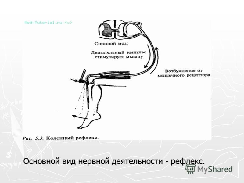 Основной вид нервной деятельности - рефлекс.