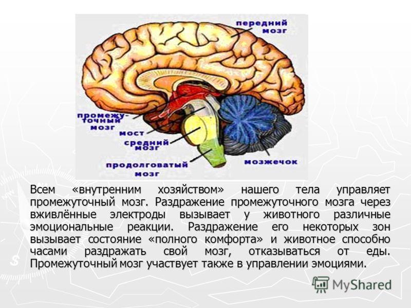 Всем «внутренним хозяйством» нашего тела управляет промежуточный мозг. Раздражение промежуточного мозга через вживлённые электроды вызывает у животного различные эмоциональные реакции. Раздражение его некоторых зон вызывает состояние «полного комфорт