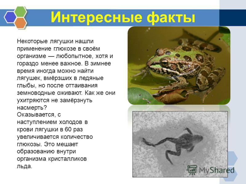 Интересные факты Оказывается, с наступлением холодов в крови лягушки в 60 раз увеличивается количество глюкозы. Это мешает образованию внутри организма кристалликов льда. Некоторые лягушки нашли применение глюкозе в своём организме любопытное, хотя и