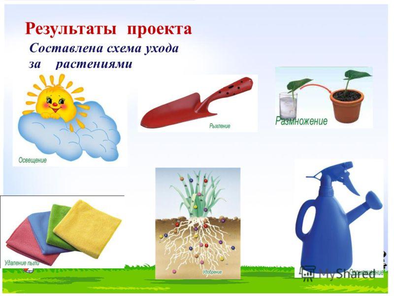 Результаты проекта Составлена схема ухода за растениями
