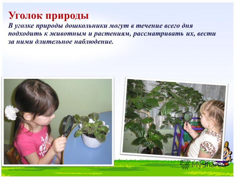 Уголок природы В уголке природы дошкольники могут в течение всего дня подходить к животным и растениям, рассматривать их, вести за ними длительное наблюдение.