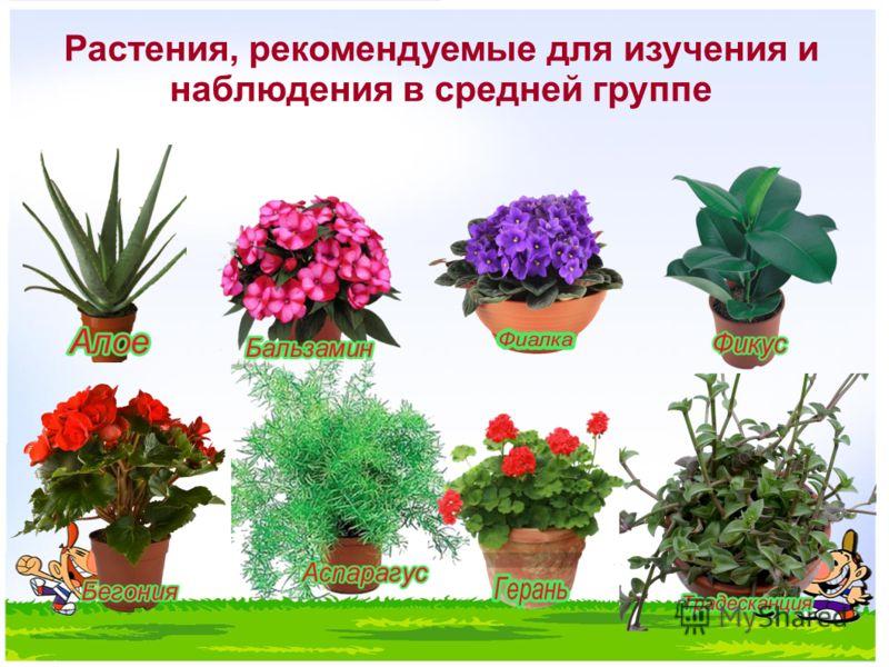 Растения, рекомендуемые для