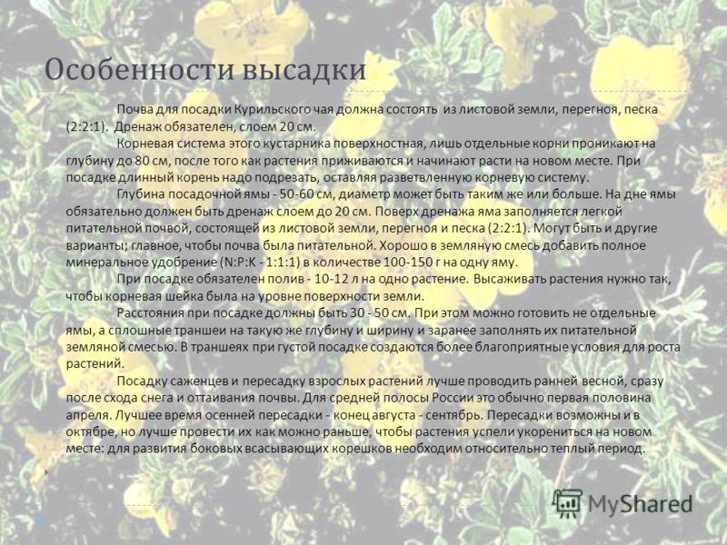 Особенности высадки Почва для посадки Курильского чая должна состоять из листовой земли, перегноя, песка (2:2:1). Дренаж обязателен, слоем 20 см. Корневая система этого кустарника поверхностная, лишь отдельные корни проникают на глубину до 80 см, пос
