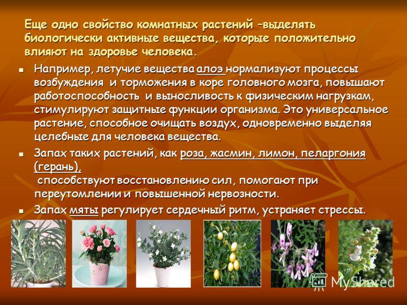 Еще одно свойство комнатных растений –выделять биологически активные вещества, которые положительно влияют на здоровье человека. Например, летучие вещества алоэ нормализуют процессы возбуждения и торможения в коре головного мозга, повышают работоспос