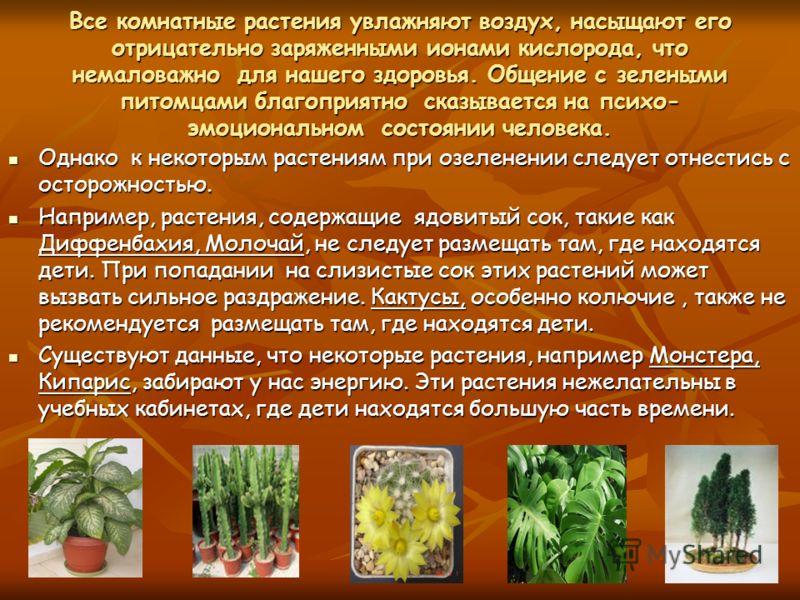 Все комнатные растения увлажняют воздух, насыщают его отрицательно заряженными ионами кислорода, что немаловажно для нашего здоровья. Общение с зелеными питомцами благоприятно сказывается на психо- эмоциональном состоянии человека. Однако к некоторым