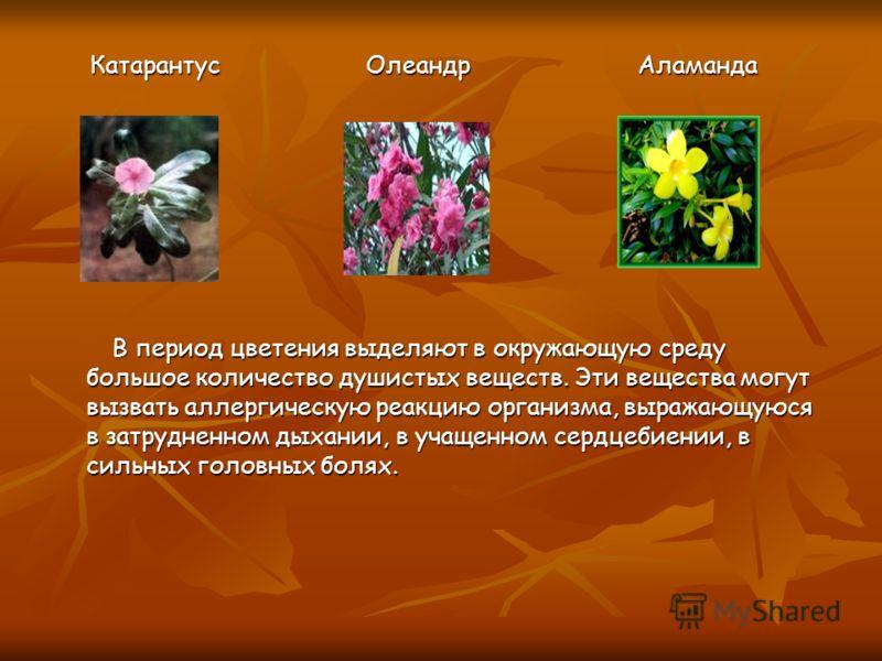 Катарантус Олеандр Аламанда Катарантус Олеандр Аламанда В период цветения выделяют в окружающую среду большое количество душистых веществ. Эти вещества могут вызвать аллергическую реакцию организма, выражающуюся в затрудненном дыхании, в учащенном се