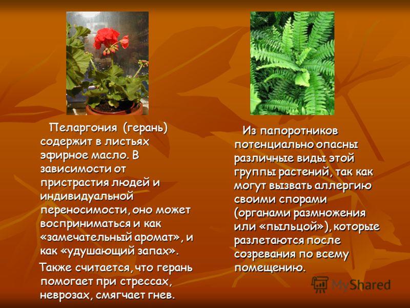 Пеларгония (герань) содержит в листьях эфирное масло. В зависимости от пристрастия людей и индивидуальной переносимости, оно может восприниматься и как «замечательный аромат», и как «удушающий запах». Пеларгония (герань) содержит в листьях эфирное ма