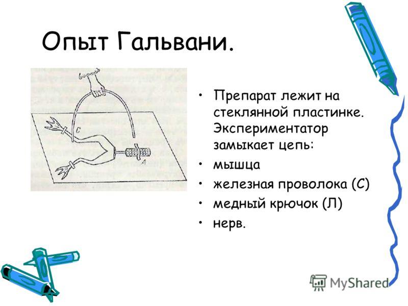 Опыт Гальвани. Препарат лежит на стеклянной пластинке. Экспериментатор замыкает цепь: мышца железная проволока (С) медный крючок (Л) нерв.