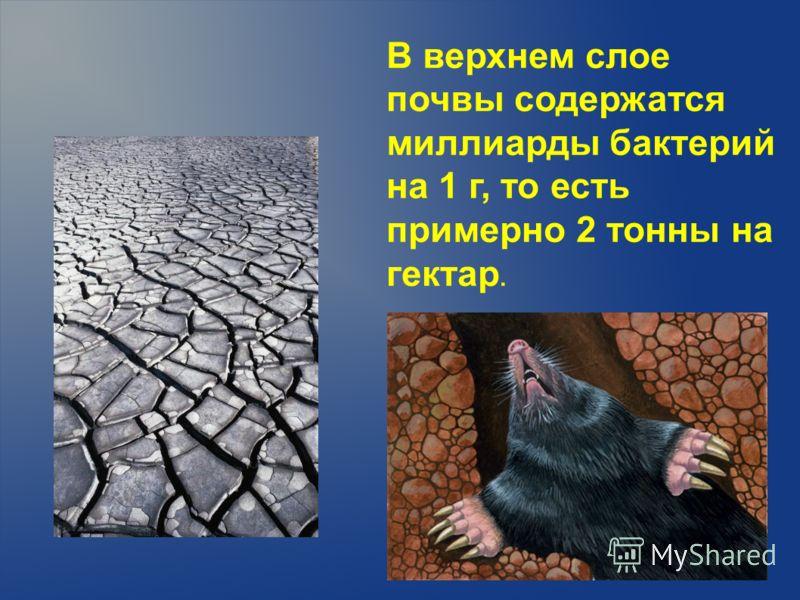 В верхнем слое почвы содержатся миллиарды бактерий на 1 г, то есть примерно 2 тонны на гектар.