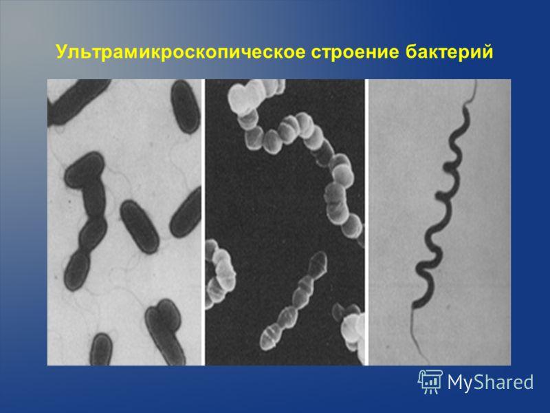 Ультрамикроскопическое строение бактерий