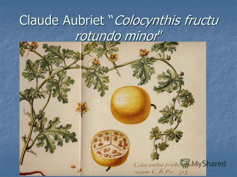 Claude Aubriet Colocynthis fructu rotundo minor