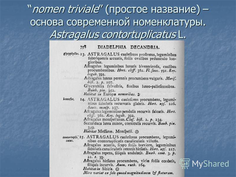 nomen triviale (простое название) – основа современной номенклатуры. Astragalus contortuplicatus L.nomen triviale (простое название) – основа современной номенклатуры. Astragalus contortuplicatus L.