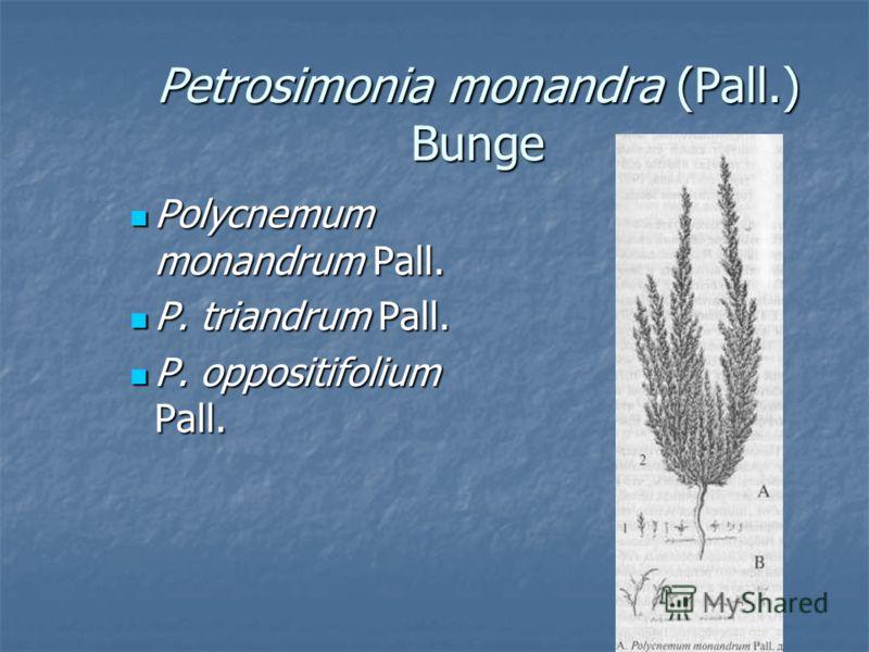 Petrosimonia monandra (Pall.) Bunge Polycnemum monandrum Pall. Polycnemum monandrum Pall. P. triandrum Pall. P. triandrum Pall. P. oppositifolium Pall. P. oppositifolium Pall.