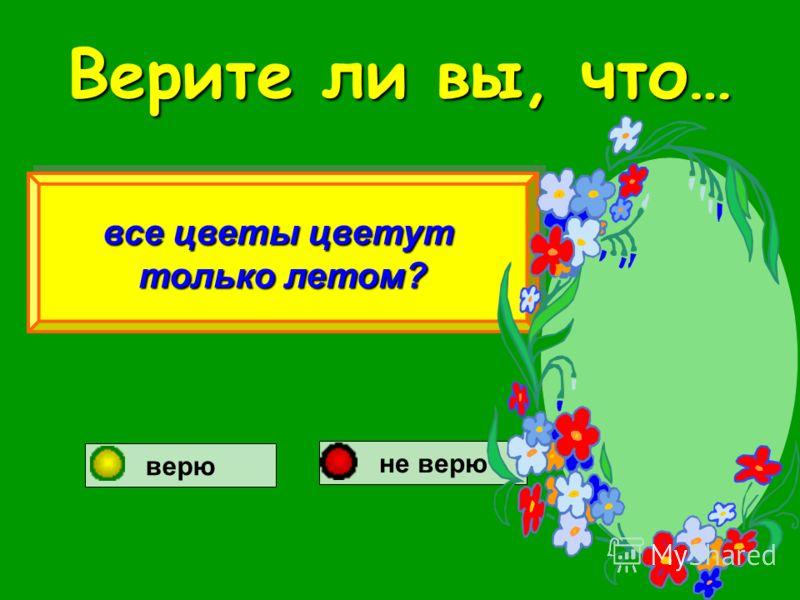 Верите ли вы, что… все цветы цветут только летом? все цветы цветут только летом? верю не верю