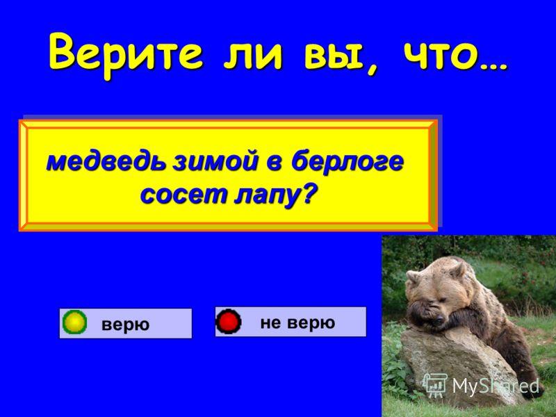 Верите ли вы, что… медведь зимой в берлоге сосет лапу? медведь зимой в берлоге сосет лапу? верю не верю