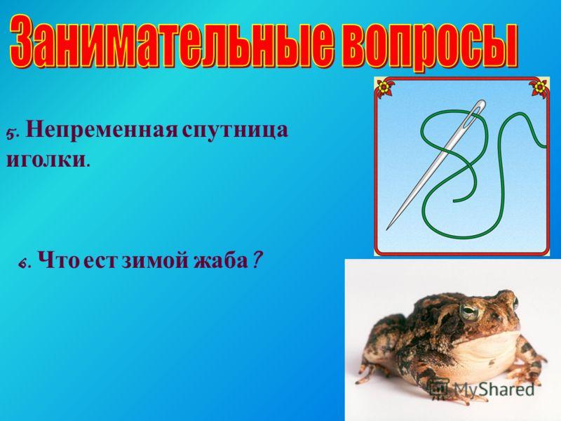 5. Непременная спутница иголки. 6. Что ест зимой жаба ?