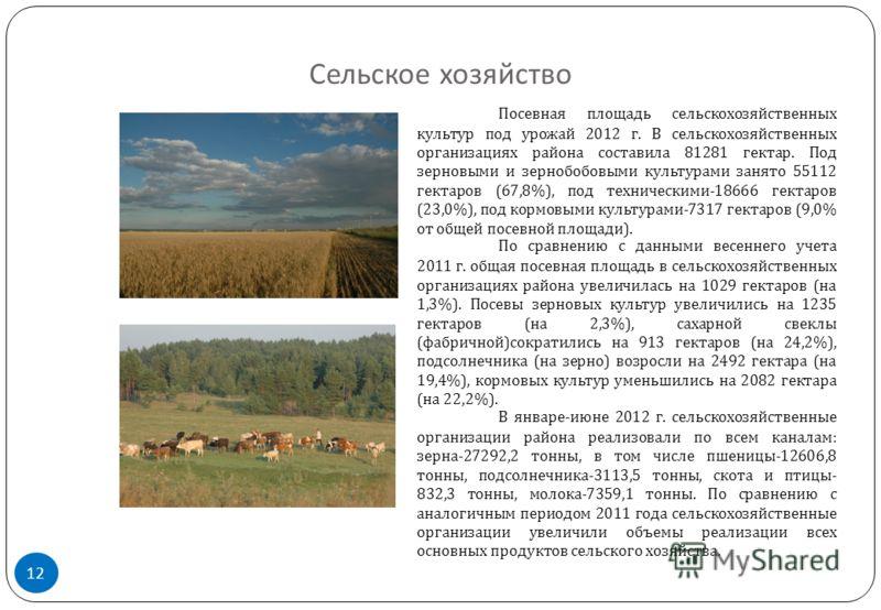 Сельское хозяйство 12 Посевная площадь сельскохозяйственных культур под урожай 2012 г. В сельскохозяйственных организациях района составила 81281 гектар. Под зерновыми и зернобобовыми культурами занято 55112 гектаров (67,8%), под техническими -18666
