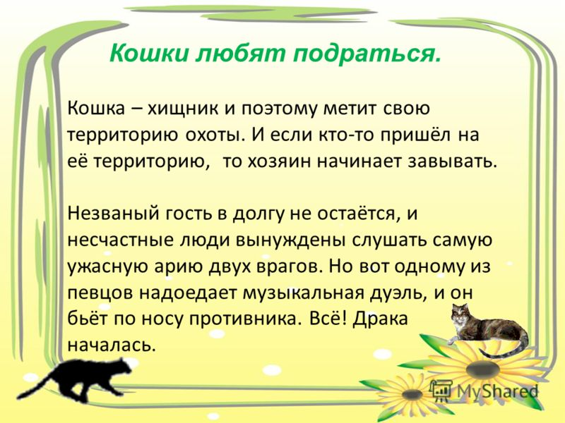 Кошки любят подраться. Кошка – хищник и поэтому метит свою территорию охоты. И если кто-то пришёл на её территорию, то хозяин начинает завывать. Незваный гость в долгу не остаётся, и несчастные люди вынуждены слушать самую ужасную арию двух врагов. Н