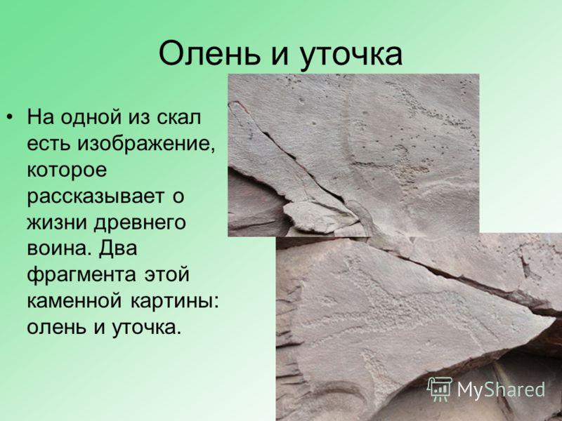 Олень и уточка На одной из скал есть изображение, которое рассказывает о жизни древнего воина. Два фрагмента этой каменной картины: олень и уточка.