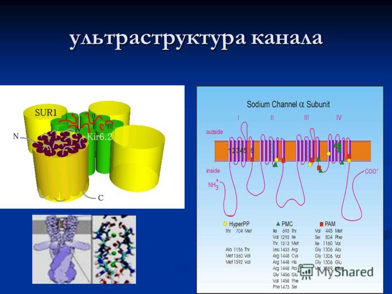 32 ультраструктура канала