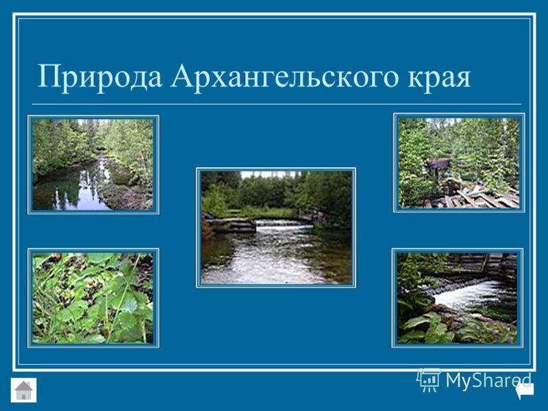 Природа Архангельского края
