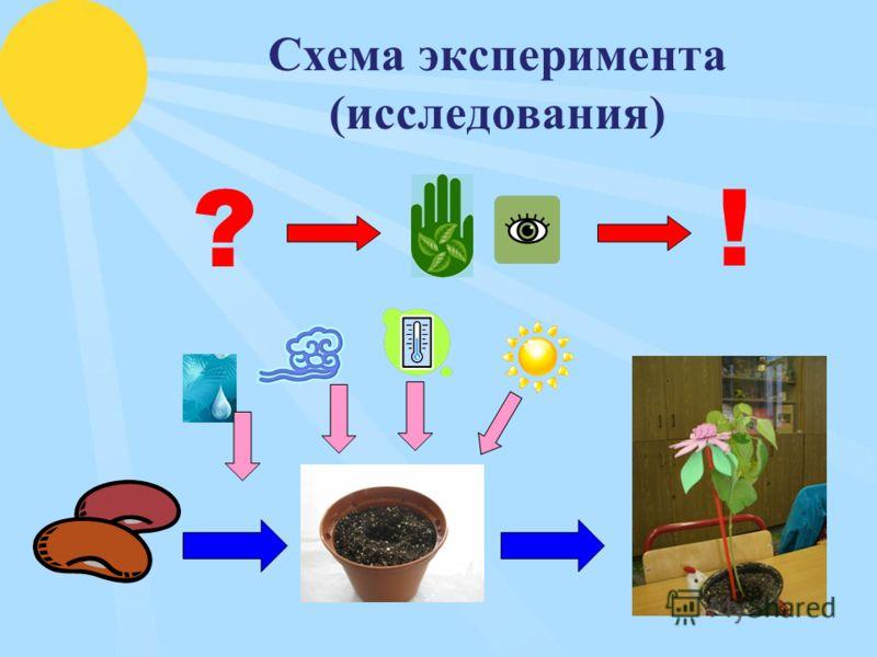 Схема эксперимента (исследования) ?!