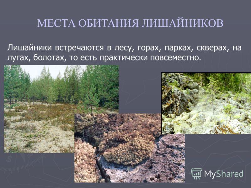 Лишайники встречаются в лесу, горах, парках, скверах, на лугах, болотах, то есть практически повсеместно. МЕСТА ОБИТАНИЯ ЛИШАЙНИКОВ