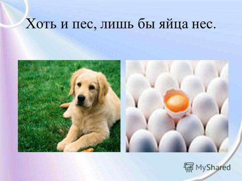 Хоть и пес, лишь бы яйца нес.