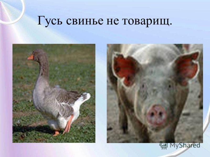 Гусь свинье не товарищ.