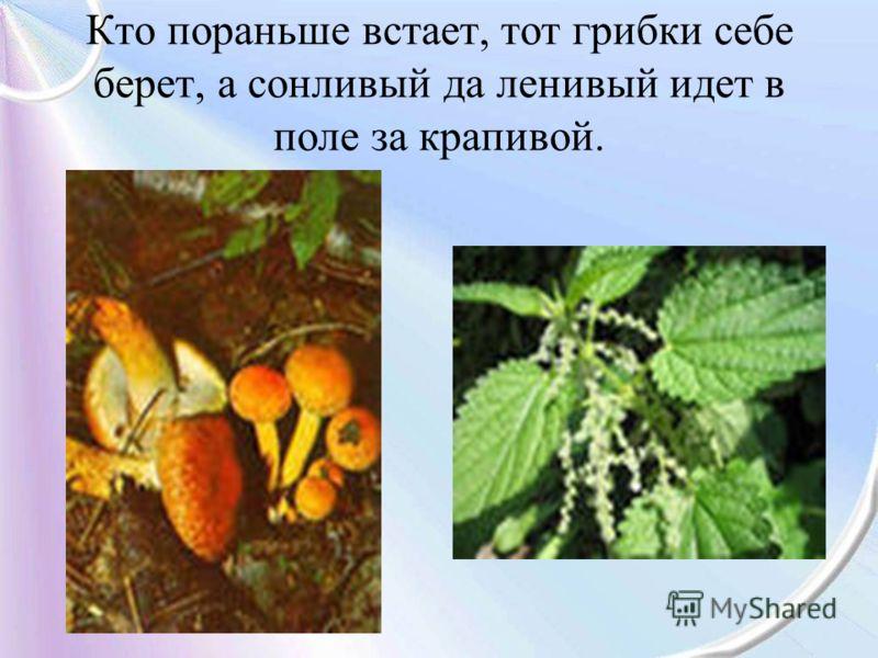 Кто пораньше встает, тот грибки себе берет, а сонливый да ленивый идет в поле за крапивой.