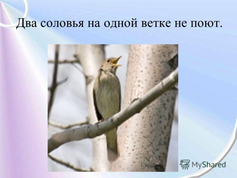 Два соловья на одной ветке не поют.