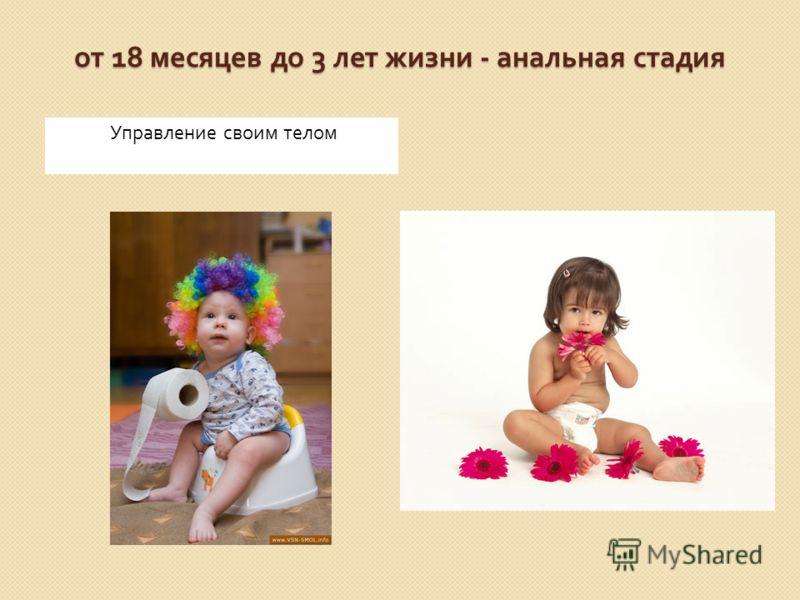 от 18 месяцев до 3 лет жизни - анальная стадия Управление своим телом