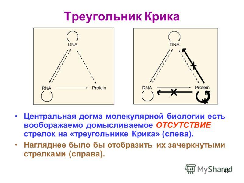 Треугольник Крика Центральная догма молекулярной биологии есть вооборажаемо домысливаемое ОТСУТСТВИЕ стрелок на «треугольнике Крика» (слева). Нагляднее было бы отобразить их зачеркнутыми стрелками (справа). 48