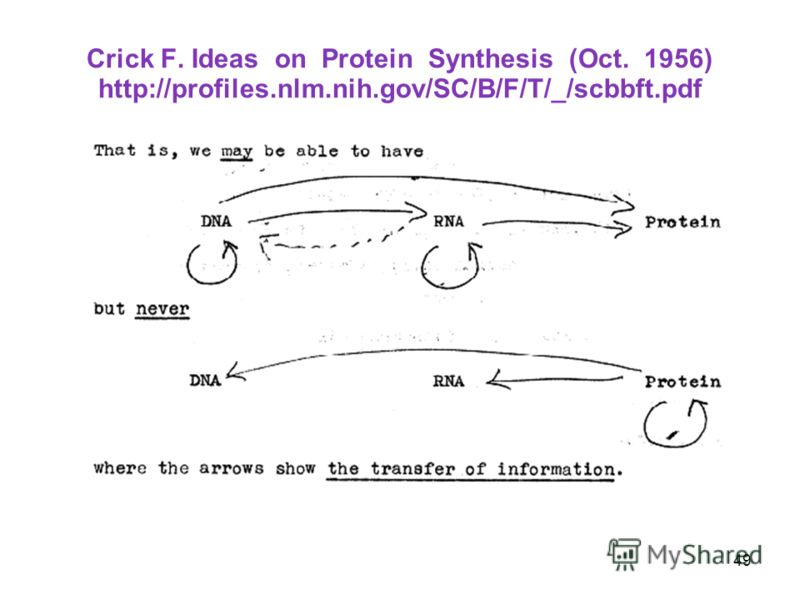 Crick F. Ideas on Protein Synthesis (Oct. 1956) http://profiles.nlm.nih.gov/SC/B/F/T/_/scbbft.pdf 49
